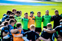 rugby, glasgow warriors